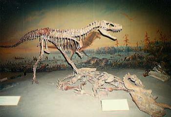 世界遺産フォト・州立恐竜公園